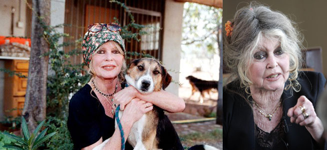 brigitte-bardot-foundations-dogs_M