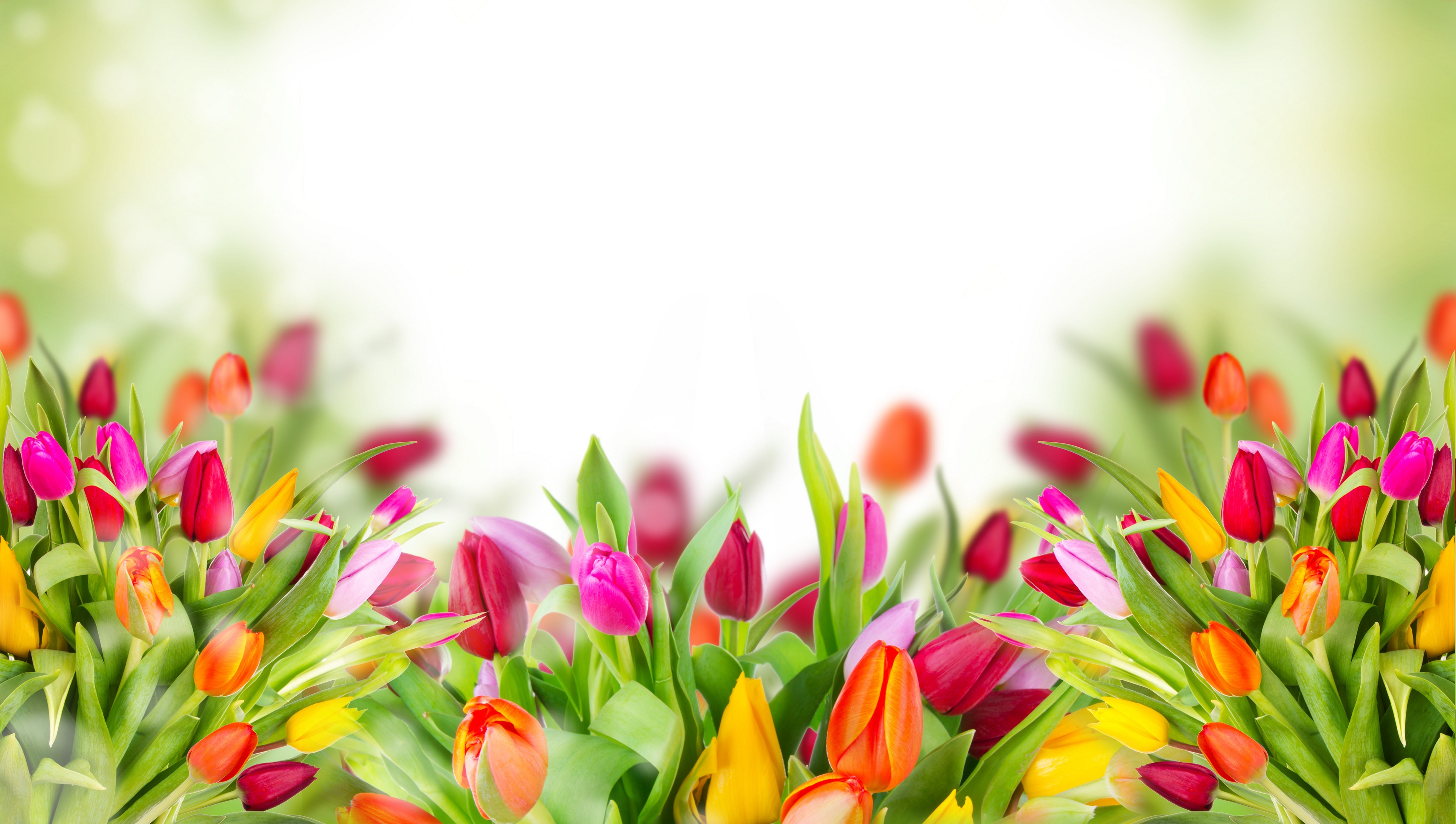 Flower-Pictures