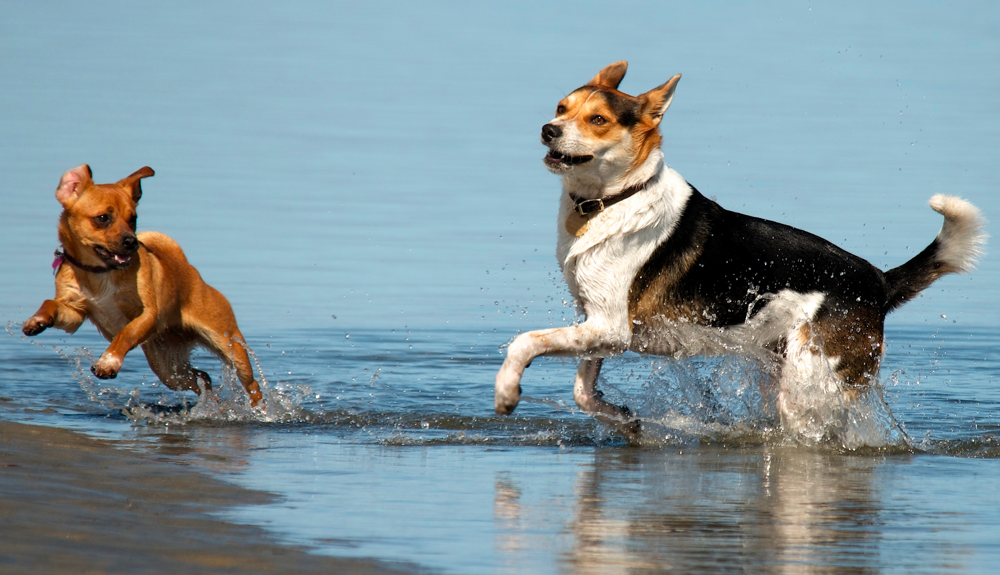 canine-friends-at-the-beach1