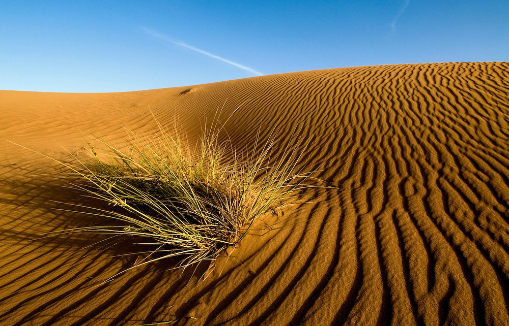 Rub al Khali. Dubai Desert Conservation Reserve, United Arab Emirates
