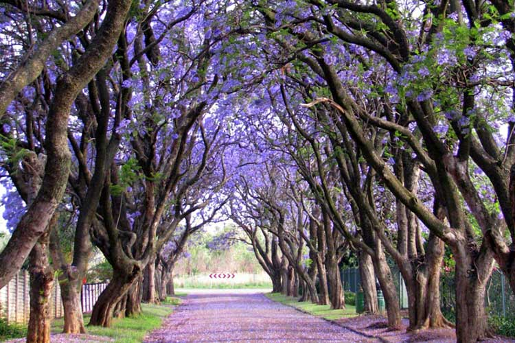 cullinan-south-africa