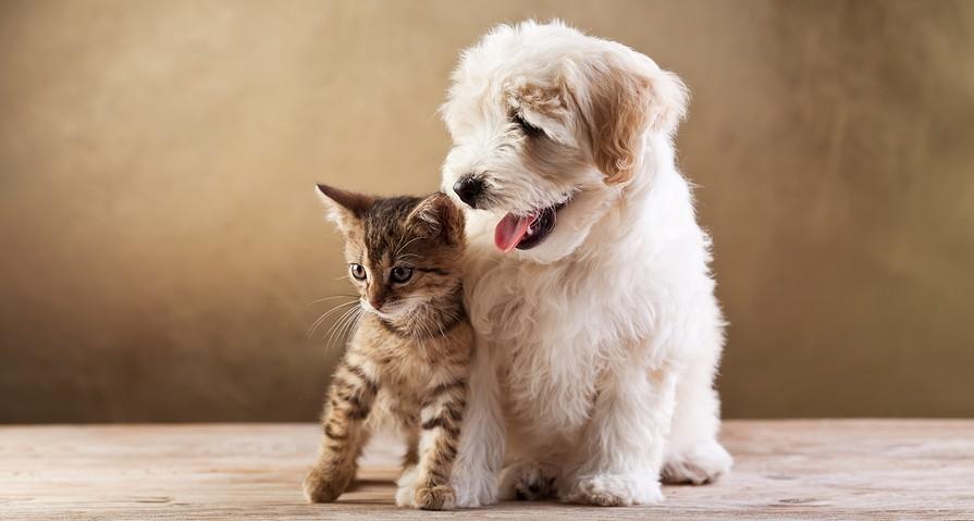 Best-friends-kitten-and-smal-e1377715929286