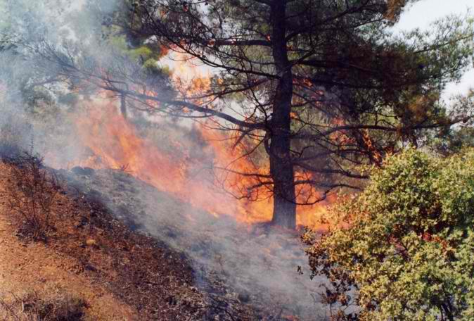 ΔΑΣΙΚΕΣ ΠΥΡΚΑΓΙΕΣ, 2007, Πυρκαγιές, Πελοπόννησος, Αρχαία Ολυμπία