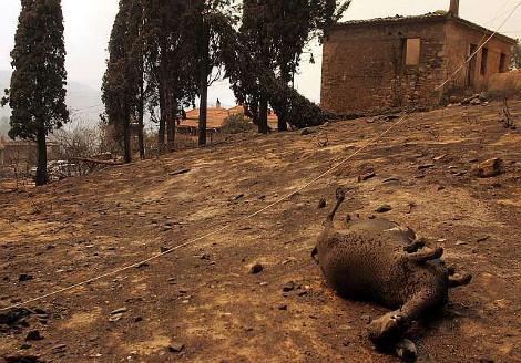 2007, Πυρκαγιές, Πελοπόννησος, Αρχαία Ολυμπία