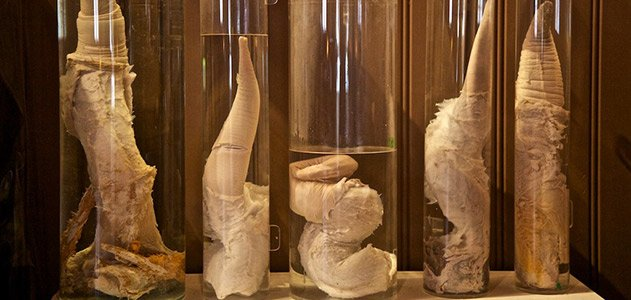 Penis-museum-631_jpg__800x600_q85_crop