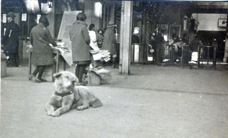 Hachi, Hachikō, σκυλί