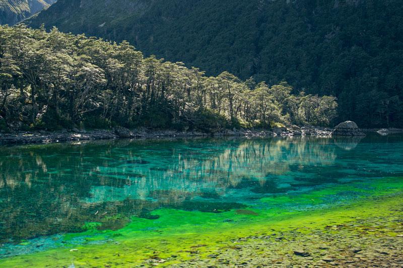 worlds-clearest-lake-blue-lake-nelson-nz-21